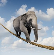 elephant balancing on a tightrope