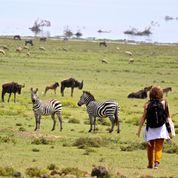 Photo Credit of Zebras in Kenya: Kristina Partsinevelos