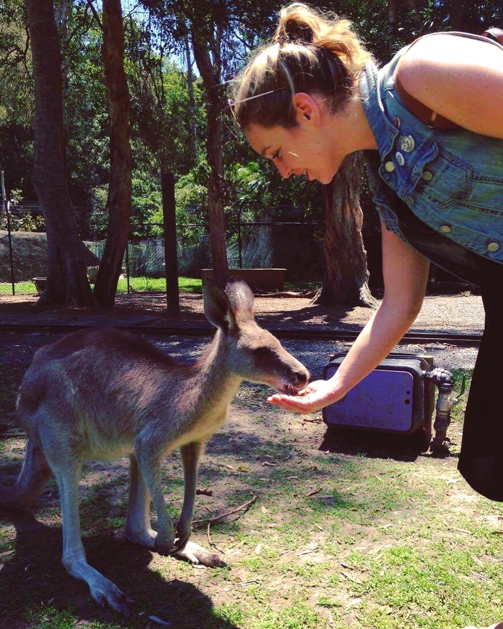 Chloe-kangaroo_gold coast